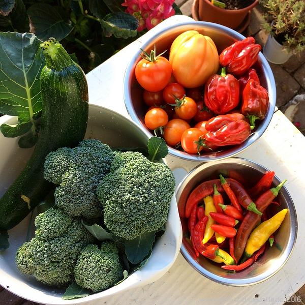 Reiche Gemüseernte im Oktober