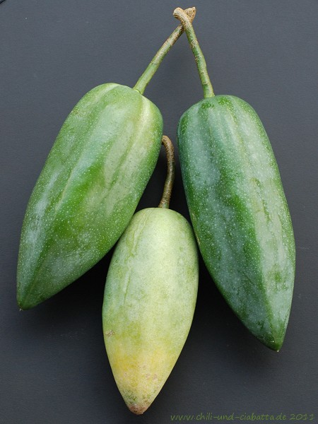 unreife Papayas