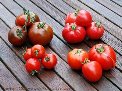 Tomatensorten 2008