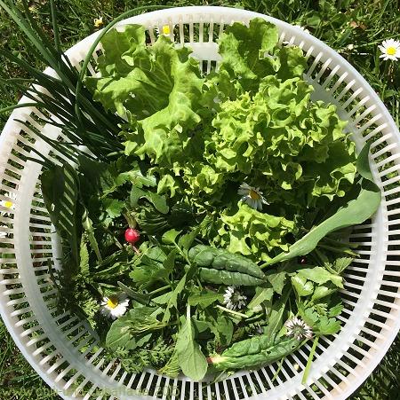 Kräutersalat quer durch den Garten