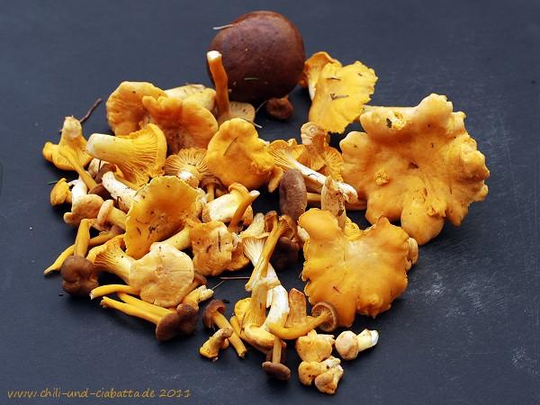 erster Pilzfund