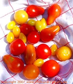 Tomatenmix aus dem Garten