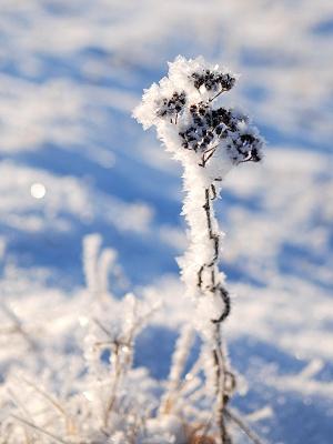 Reif bei -18°C