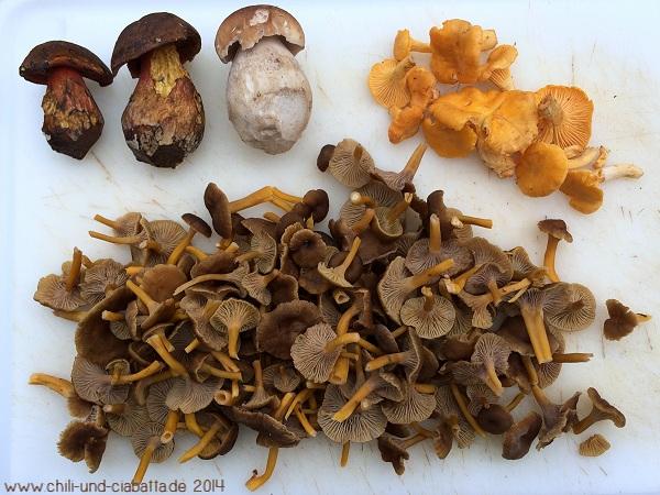 Pilze, Trompetenpfifferlinge